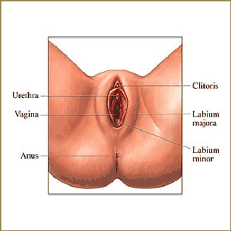 is vaginal what labioplasty
