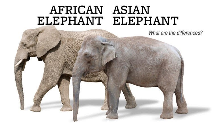 and diff asian african elaphants of