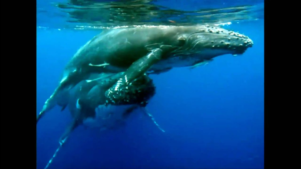 cycle sperm life whale